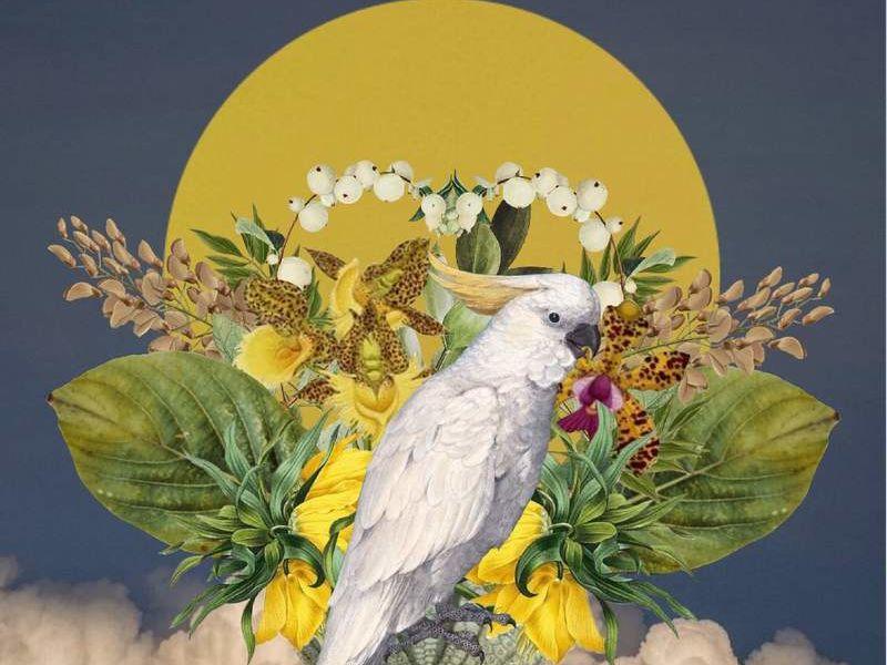 Arte Chileno - Papagayo circulo amarillo