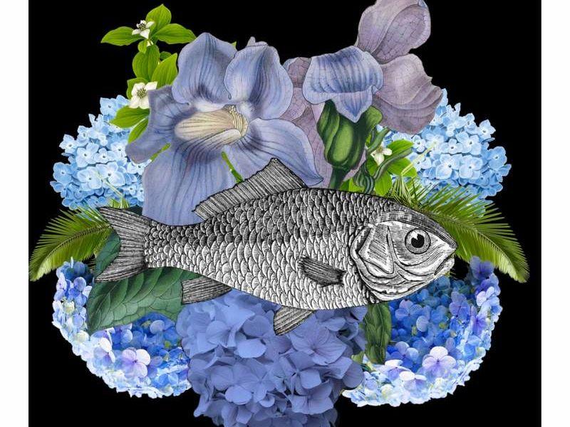 Conka Collage - pez flores azules