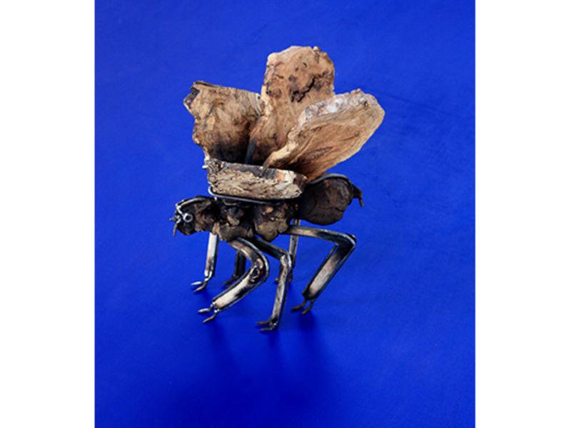 García Karolys / Insecto desconocido III