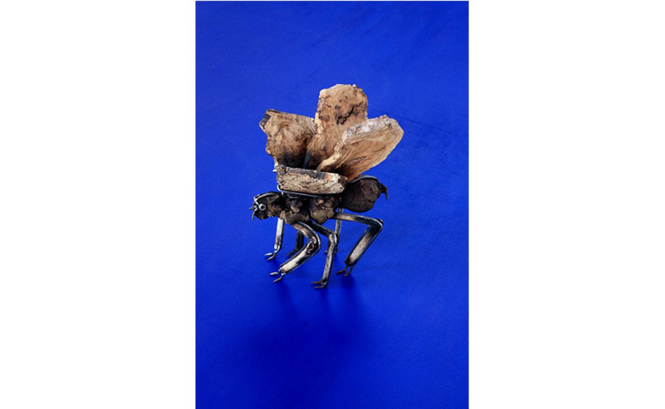 García Karolys / Insecto desconocido III | García Karolys Gabriel